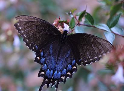 butterfly-landing-IMG_4321