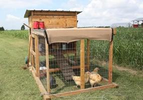 chicken-tractor-sm