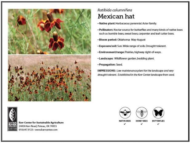 Pollinator Plant Profile: Mexican hat