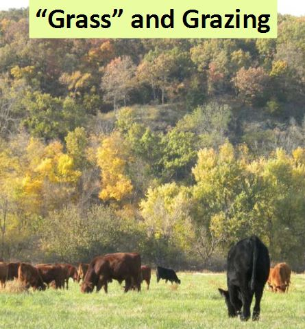 """""""Grass"""" and Grazing"""