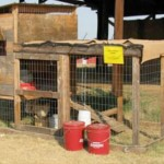 president's note chicken tractor plans