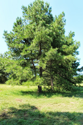 Agroforestry Report