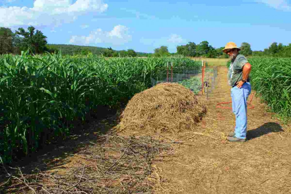 Compost windrows and cover crops