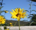 Plan your Pollinator-Friendly Landscape