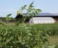 Position Announcement: Education / Horticulture Program Manager