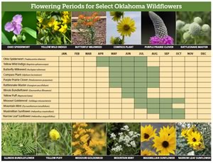 Flowering Periods for Select Oklahoma Wildflowers