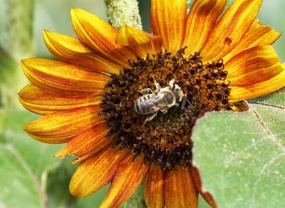 pollinator-landing