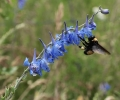 Make Room for Pollinators in Your Garden Plans