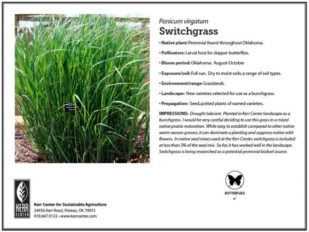switchgrass-620x465.jpg