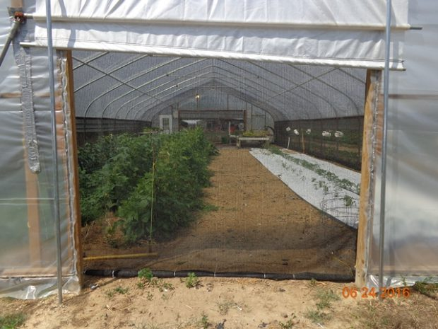 President's Note: Table Grape High Tunnel Research