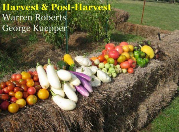 Harvest and Post-Harvest