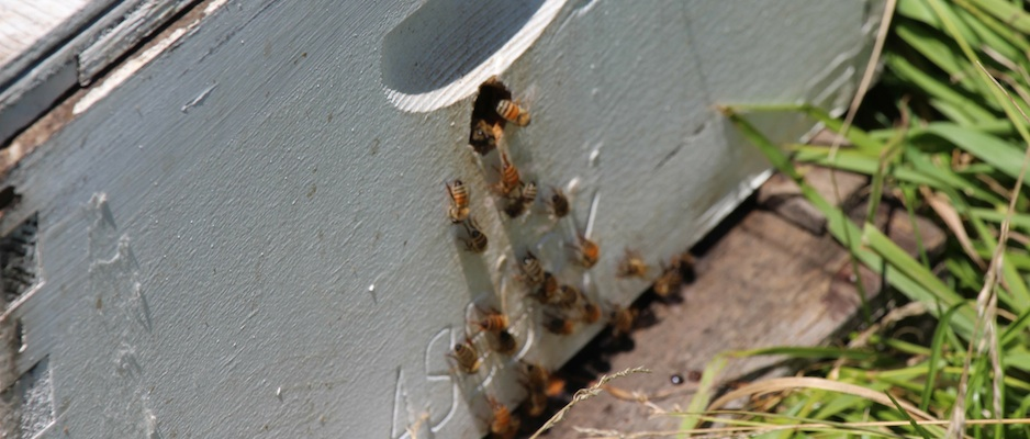 Beekeeping Workshop Recap