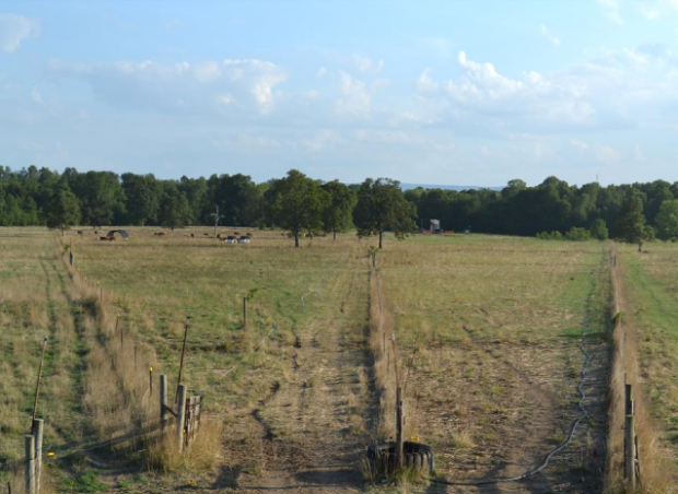 Setting up a Management Intensive Grazing System