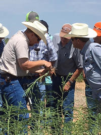 Texas Farmers Learn to Build Soil Health Through No-till and Cover Crops