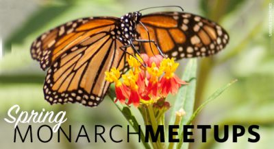 CANCELED: Monarch Meetup: McAlester @ McAlester (McAlester Public Library)