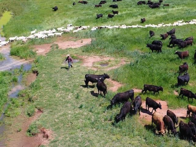 cropland pasture soil organic matter