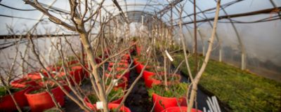 Managing Weather-Related Risk for Specialty Crops @ Ardmore (Noble Research Institute)