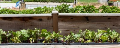 How to Build Raised Beds and Container Gardens @ Ardmore (Noble Research Institute)