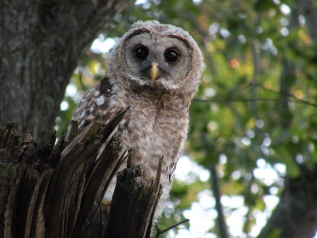 President's Note: Bird Populations in Decline