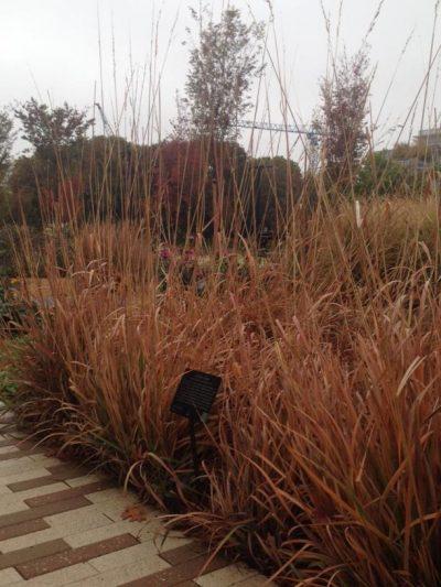 Myriad Gardens Walking Tour @ Oklahoma City (Myriad Botanical Gardens)