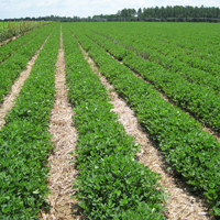 Webinar: Practices Supporting Sustainable and Economic Cotton Production