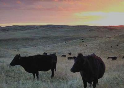 Webinar: Weathering the Change - Climate Change & Farming/Ranching @ online