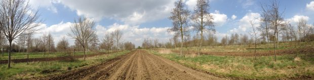 Agroforestry Boosts Pollinator Numbers, Research Shows