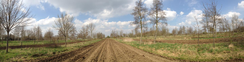 agroforestry pollinators