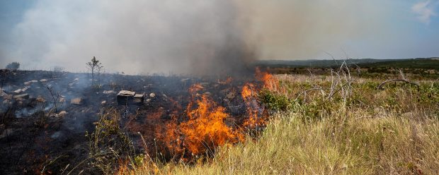 Field Day: Understanding the Impacts of Fire on Your Property