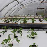 hydroponics first observations