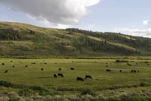 Oklahoma in Top 10 Nationwide for CRP Grasslands Acreage