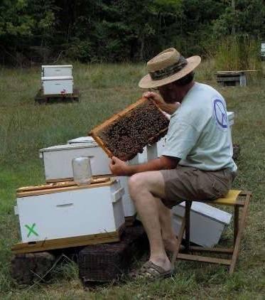 Workshop: Getting Started in Beekeeping @ online