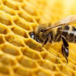 approved pesticides harm bees
