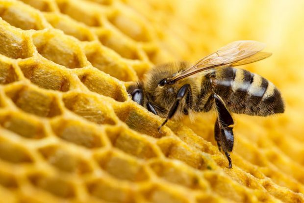 Two Pesticides Approved for Use in U.S. Found to Harm Bees