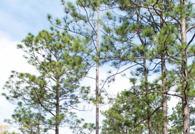 Virtual Conference: Heirs' Property & Sustainable Forest Management @ online