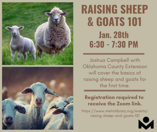 Raising Sheep & Goats 101