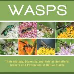 wasps guide north america
