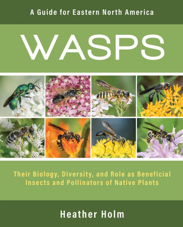 President's Note: Book Review: Wasps: A Guide for Eastern North America