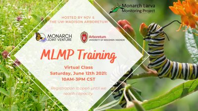 Monarch Larva Monitoring Project Training @ online