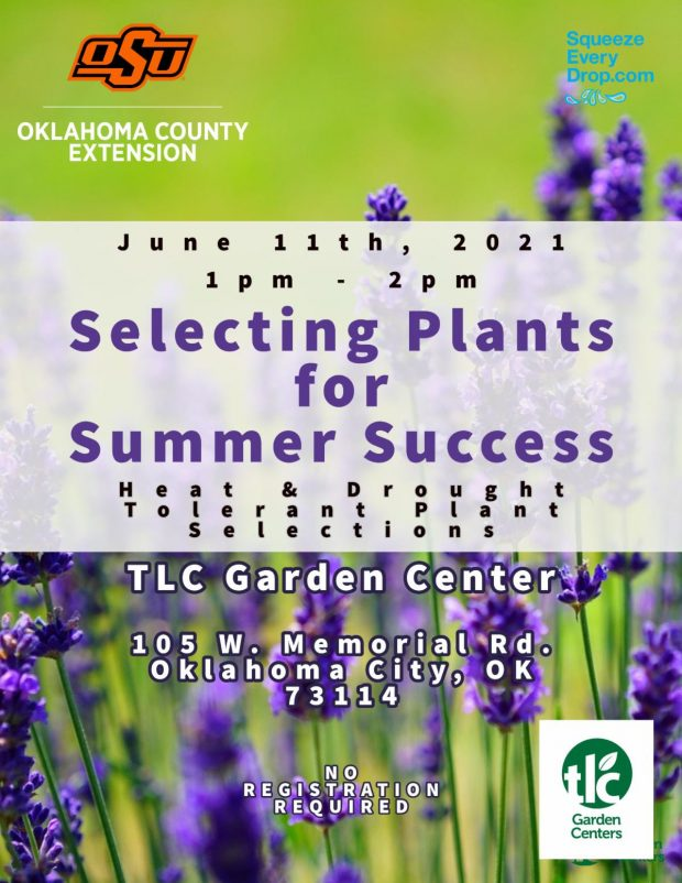 Selecting Plants for Summer Success