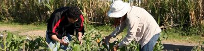 Southern SARE On-Farm Research Grants Webinar @ online