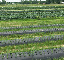Practical Tools for a Climate-Resilient Farm: Cover Crops, Biochar, and On-Farm Water Management @ online