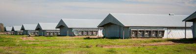 Pandemic Livestock Indemnity Program (application deadline)