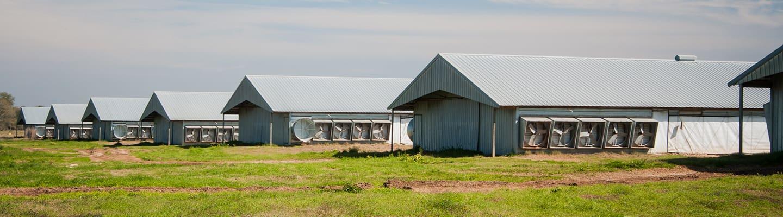 pandemic livestock indemnity deadline