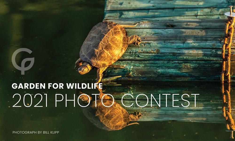 garden wildlife photo contest
