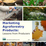 marketing agroforestry products