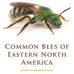 common bees north america