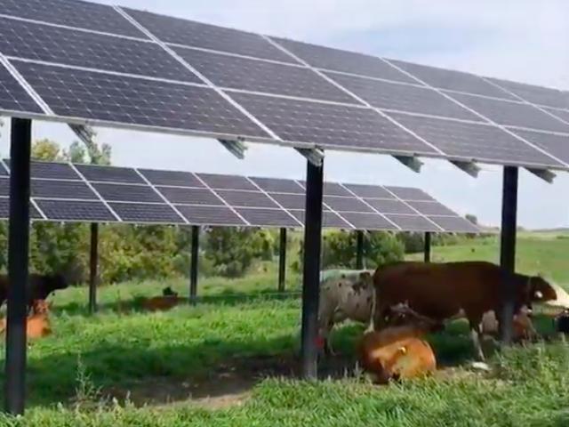 pasture panels agrivoltaics